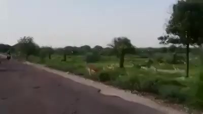 Gujarat Highway  Source : WhatsAppfamilygroup   P.S. I haven't shot this video.  I m Home.